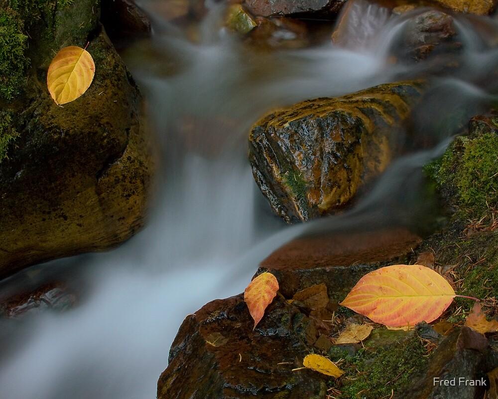 Cascadilla Creek by Fred Frank