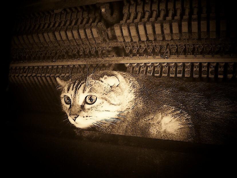 Piano Cat by Natania Rogers