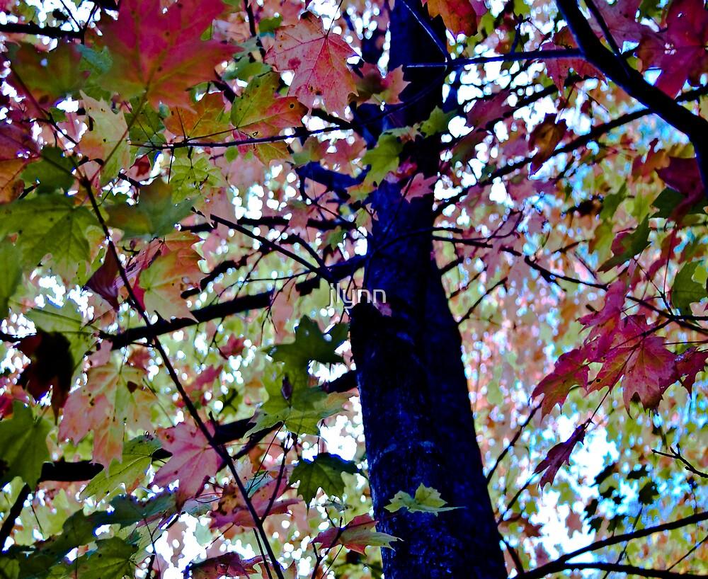 Pale Tree by jlynn