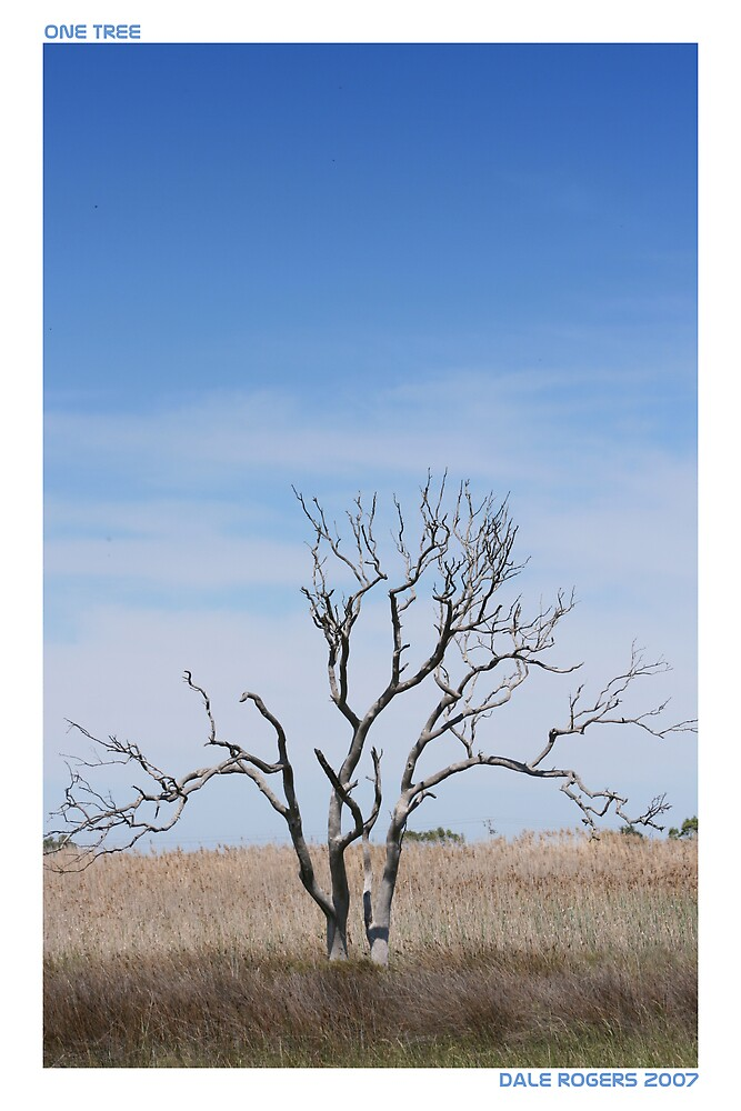 One Tree by dale rogers