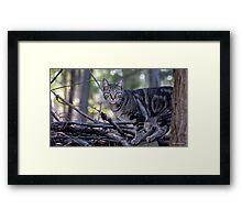 Woodland Creature Framed Print