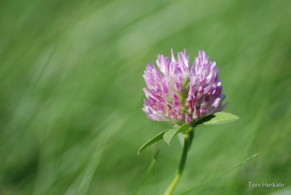 Wildflower 1 by Toni Herkalo
