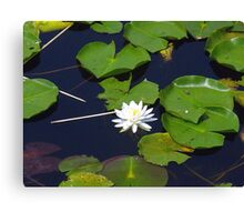 Flower on the lilly pad Canvas Print