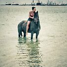 Horse Beach by garts