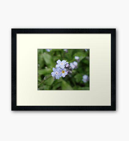 Petals of Wild Blue Framed Print