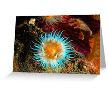 Vibrant Anemone Greeting Card