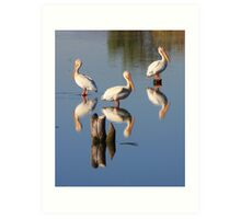 Perching Pelicans Art Print