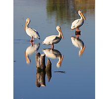 Perching Pelicans Photographic Print