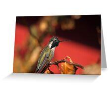 Perched Hummingbird Greeting Card