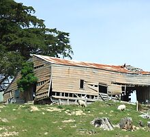 The Old Shearing Shed by Paul Martin
