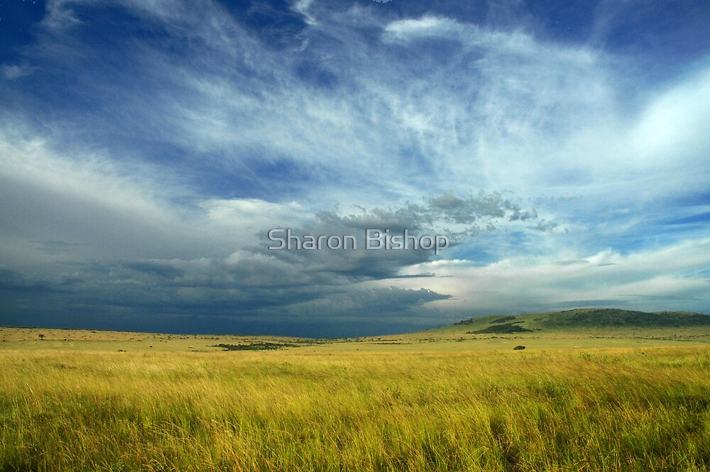 Masai Mara storm by Sharon Bishop