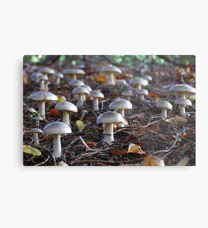 Toadstool army Metal Print