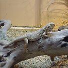 Here lizard, lizard, lizard by Valeria Lee