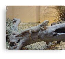 Here lizard, lizard, lizard Canvas Print