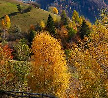 Autumn colors by bocosb