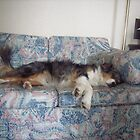 Its a dogs life! by irene garratt