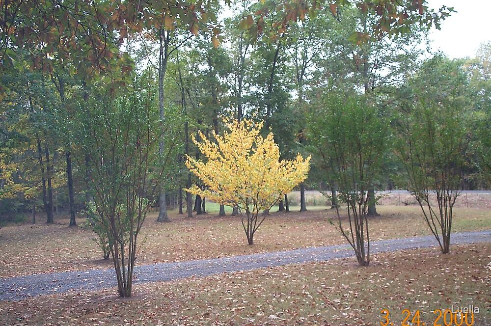 My yellow tree by Luella