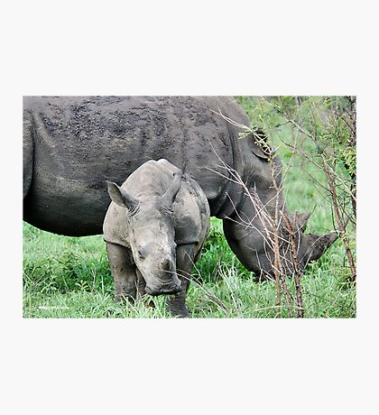 UP CLOSE WITH RHINO BABY AND MOTHER - White Rhinoceros - Ceratotherium sumum  Photographic Print