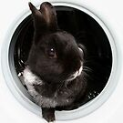 Laundry Mistake! by Becca  Cusworth