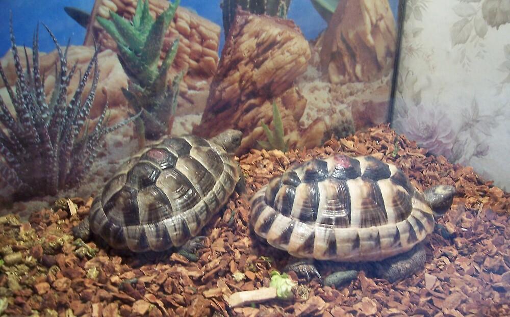 Tortoise by muhdin