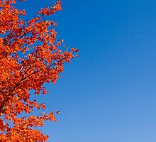 Fall Colors by Baillyphoto