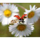 Ladybug almost flying away. by Ellen van Deelen