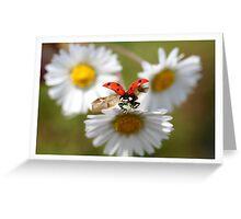 Ladybug almost flying away. Greeting Card