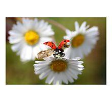 Ladybug almost flying away. Photographic Print