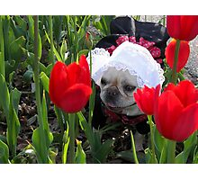 Lily in the Tulips Photographic Print
