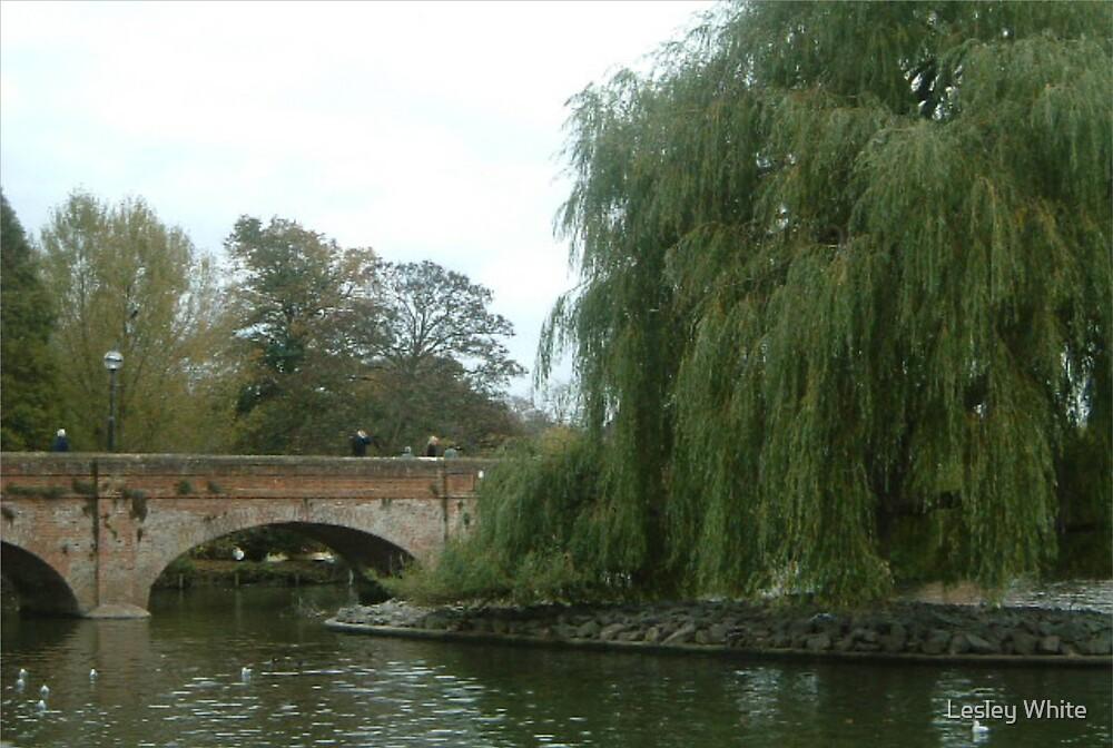 Bridge on the Avon by Lesley White