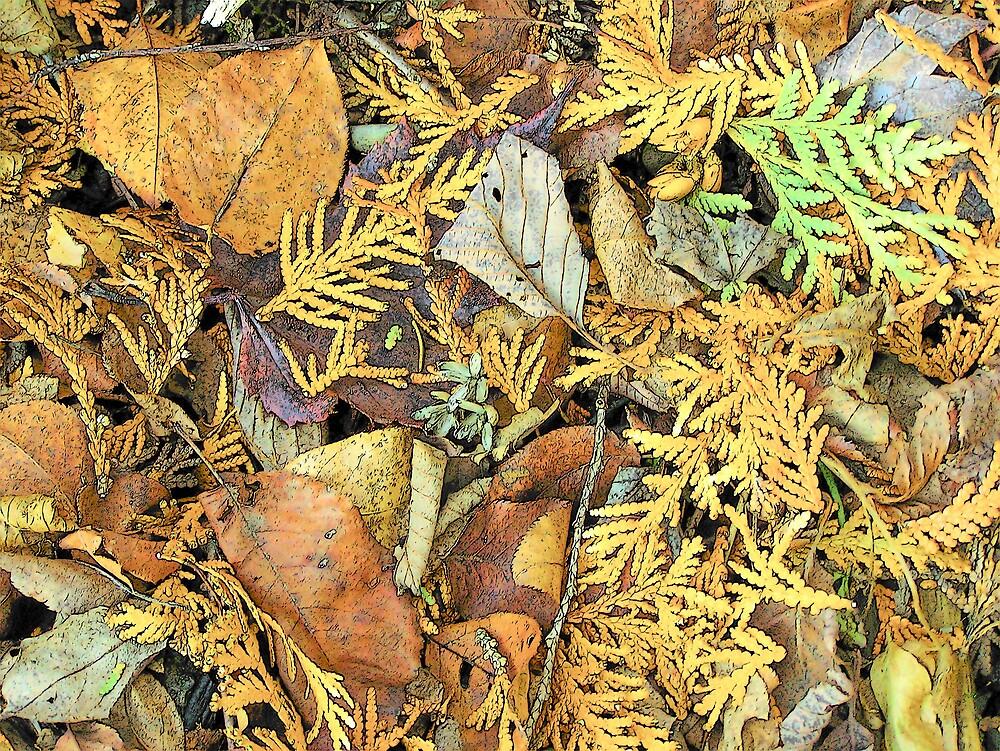 Forest Floor by Gene Cyr