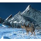 The Flatirons And Deer by nikongreg