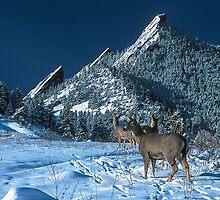 The Flatirons And Deer by nikongreg