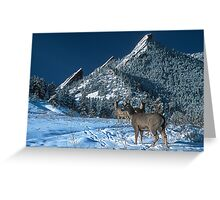 The Flatirons And Deer Greeting Card
