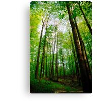 Towering Trees Canvas Print