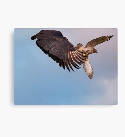 Avian Rivalry  Canvas Print