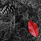 Discarded & Forgotten by Michelle Hitt