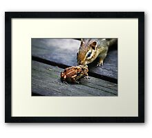 the chipmunk & the toad Framed Print