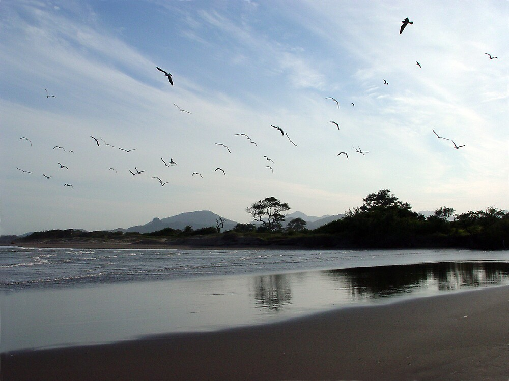 some birds in the beach by catalina acosta