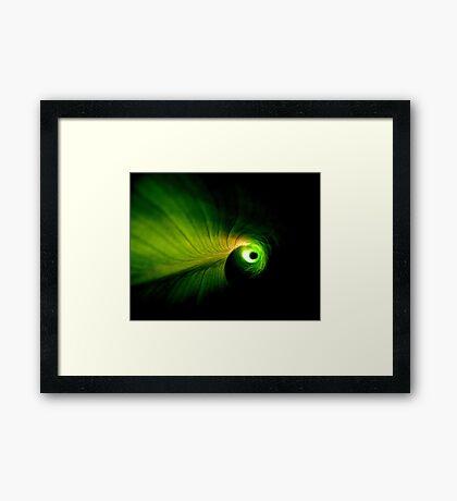 Cannaceae Framed Print
