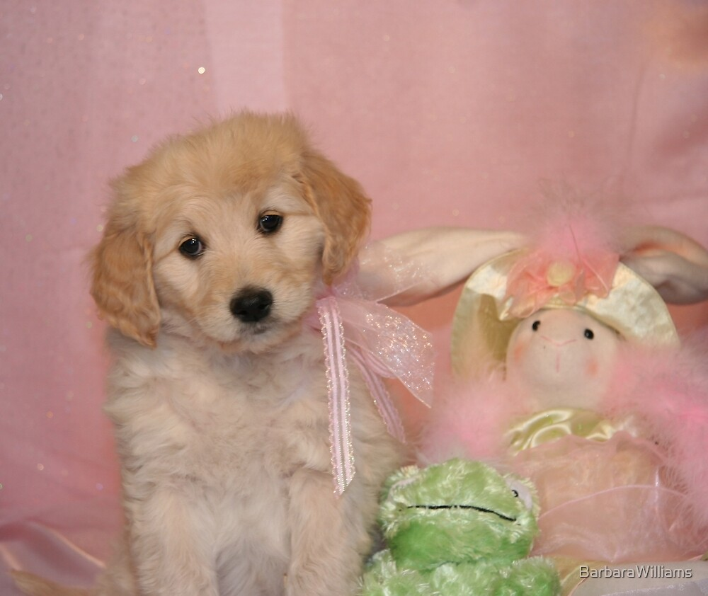 Goldendoodle Puppy by BarbaraWilliams