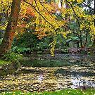 Autumn #2, Alfred Nicholas Memorial Gardens, Victoria, Australia by johnrf