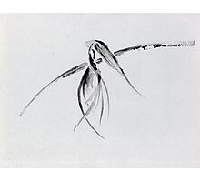 0002 - Brush and Ink - Crow Photographic Print