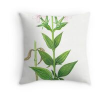 Bouncing Bet - Saponaria officinalis Throw Pillow