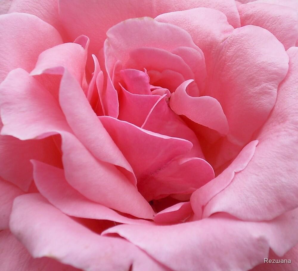 Inside pink by Rezwana