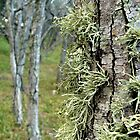 Lichen by Woodgate