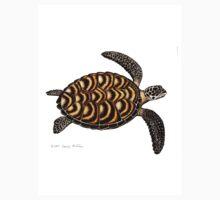 Hawksbill Sea Turtle by Carolyn  McFann