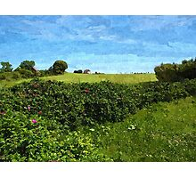 Beautiful green field and blue sky Photographic Print