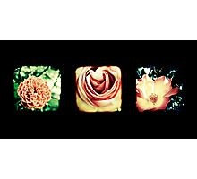 Flashback Rose Triptych Photographic Print