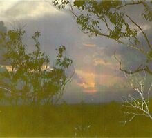 Sunset, Bush, by gerda123